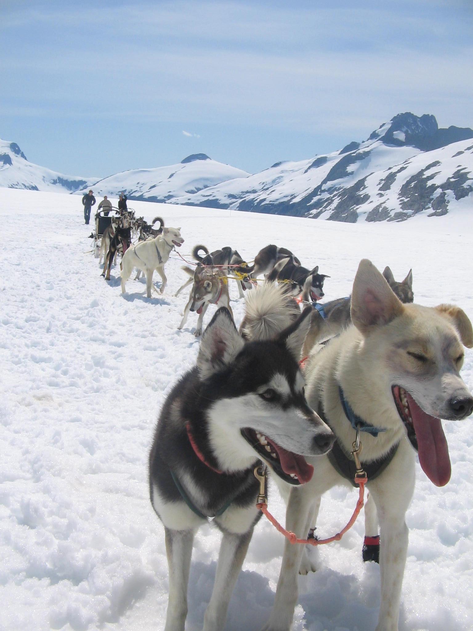 dog sled archives amazing journeys